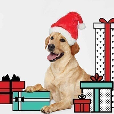 Colorado Mills - Promo - Pet Photos with Santa Pet-Photo-with-Santa_Promo.jpg
